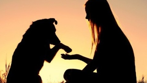 5 Best Bonding Activities for you and your doggy
